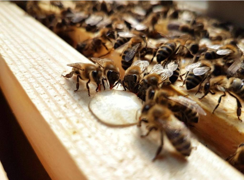 Erst die Biene, dann der Mensch ist ihr Leitsatz