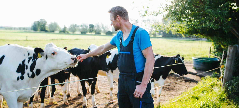 Kühe vom Hof Pöhl-Zimmermann