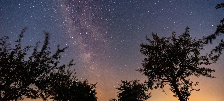 Die Milchstraße über einer Obstbaumallee in der Altmark