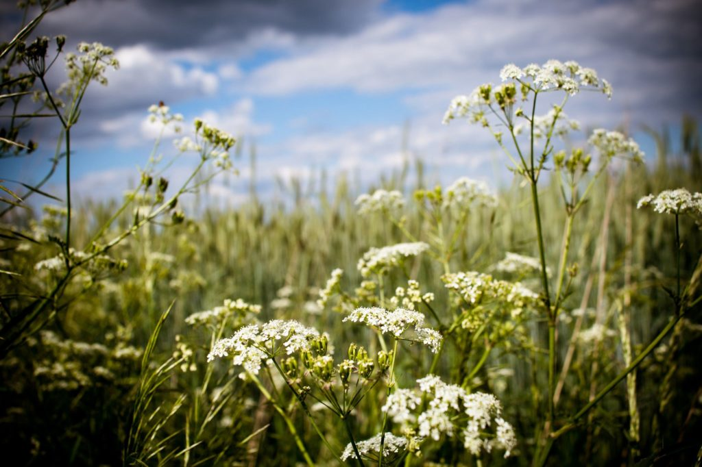 Felder in der Altmark